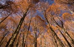 Abruzzo National Park, Italy
