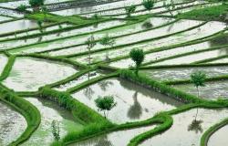 Risaie di Tirtaganggaa Bali, Indonesia, Asia, paesaggi