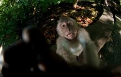 Monkey Forest, Ubud,  Bali, Indonesia, Asia, paesaggi