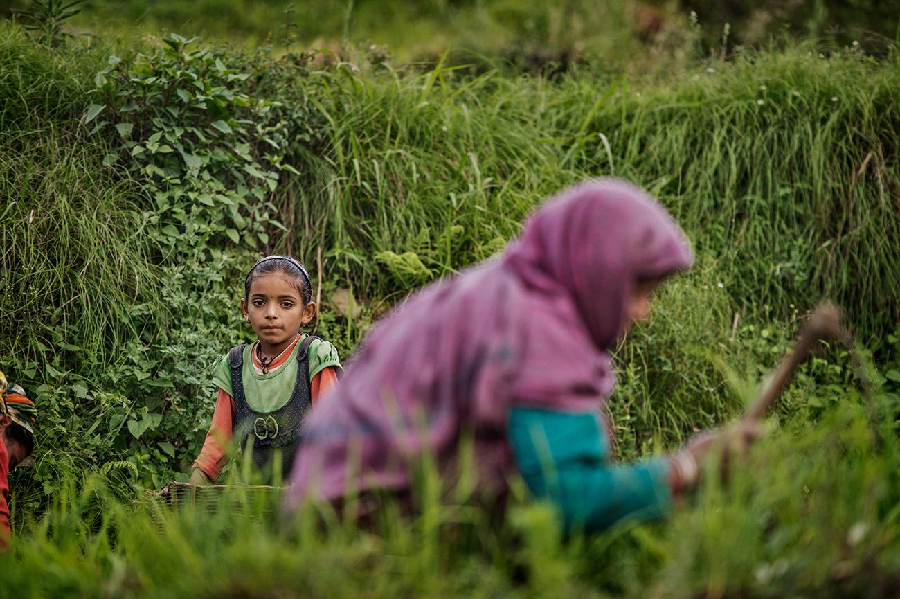 Ghuttu, India