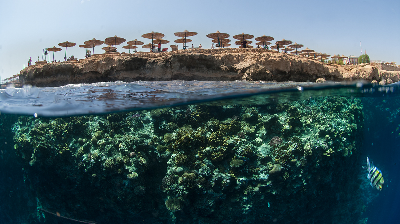 Amphoras Hotel reef,  Sharm el Sheikh, Red Sea, Egypt