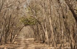 Rathambhore National Park