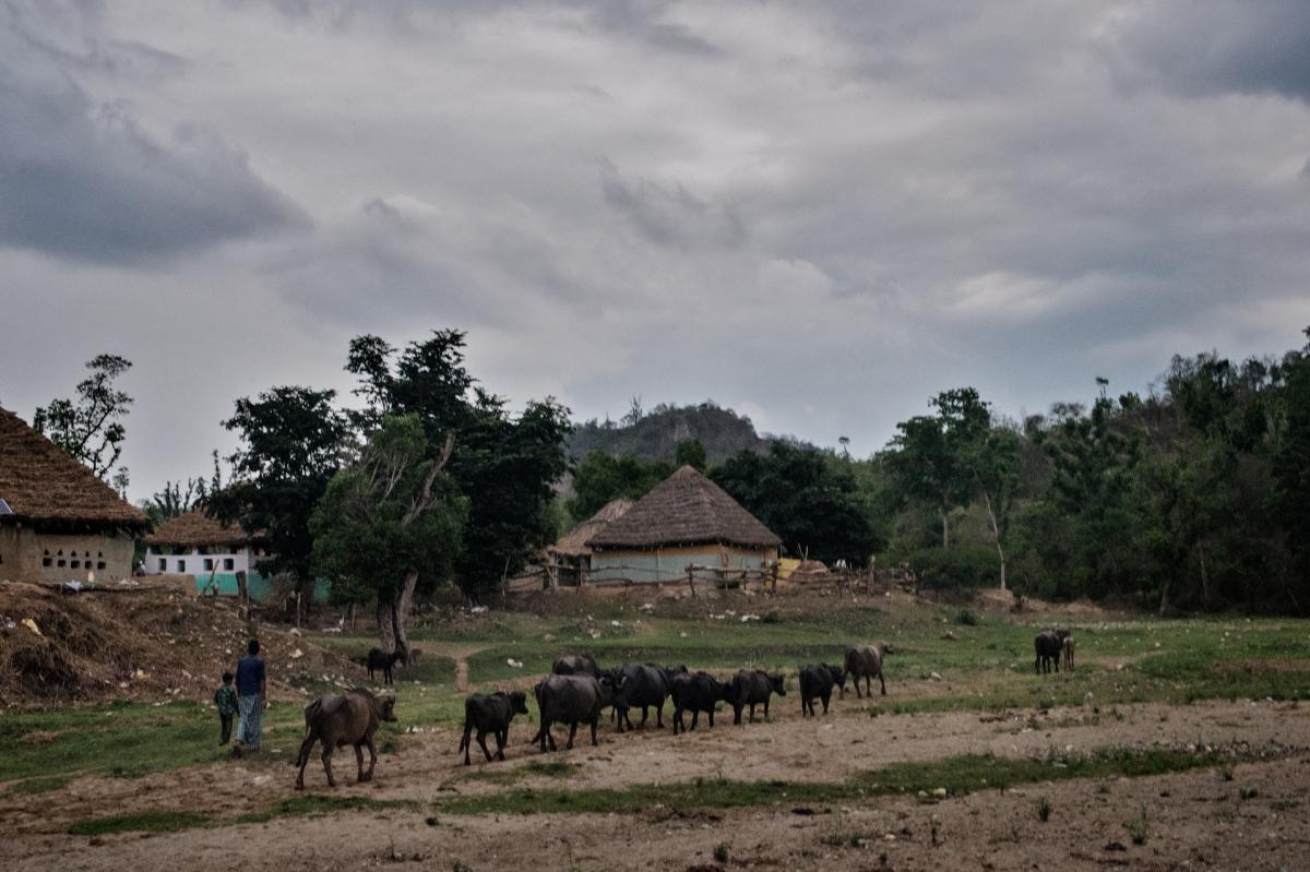 Van Gujar village