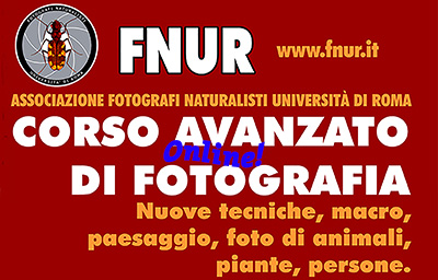 Corso avanzato online di fotografia